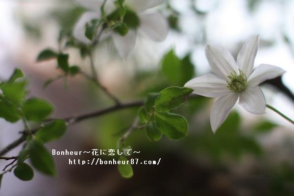 https://bonheur8711.com/