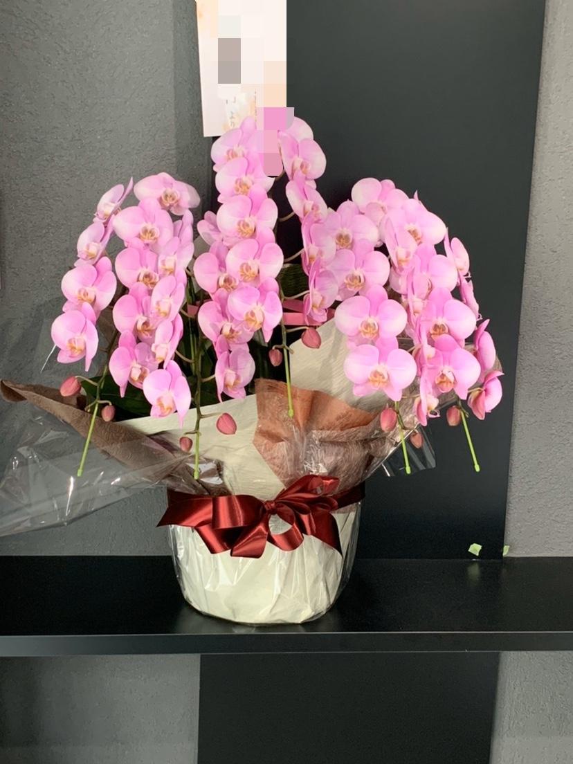 移転のお祝いに、胡蝶蘭のお届け 福岡市 花屋 ボヌール;