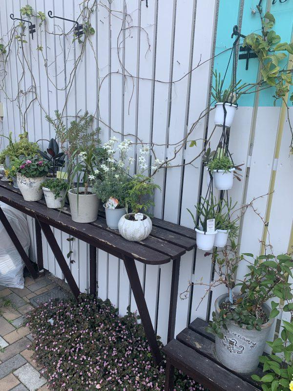 観葉植物の成長を楽しむ 福岡市花屋 ボヌール;