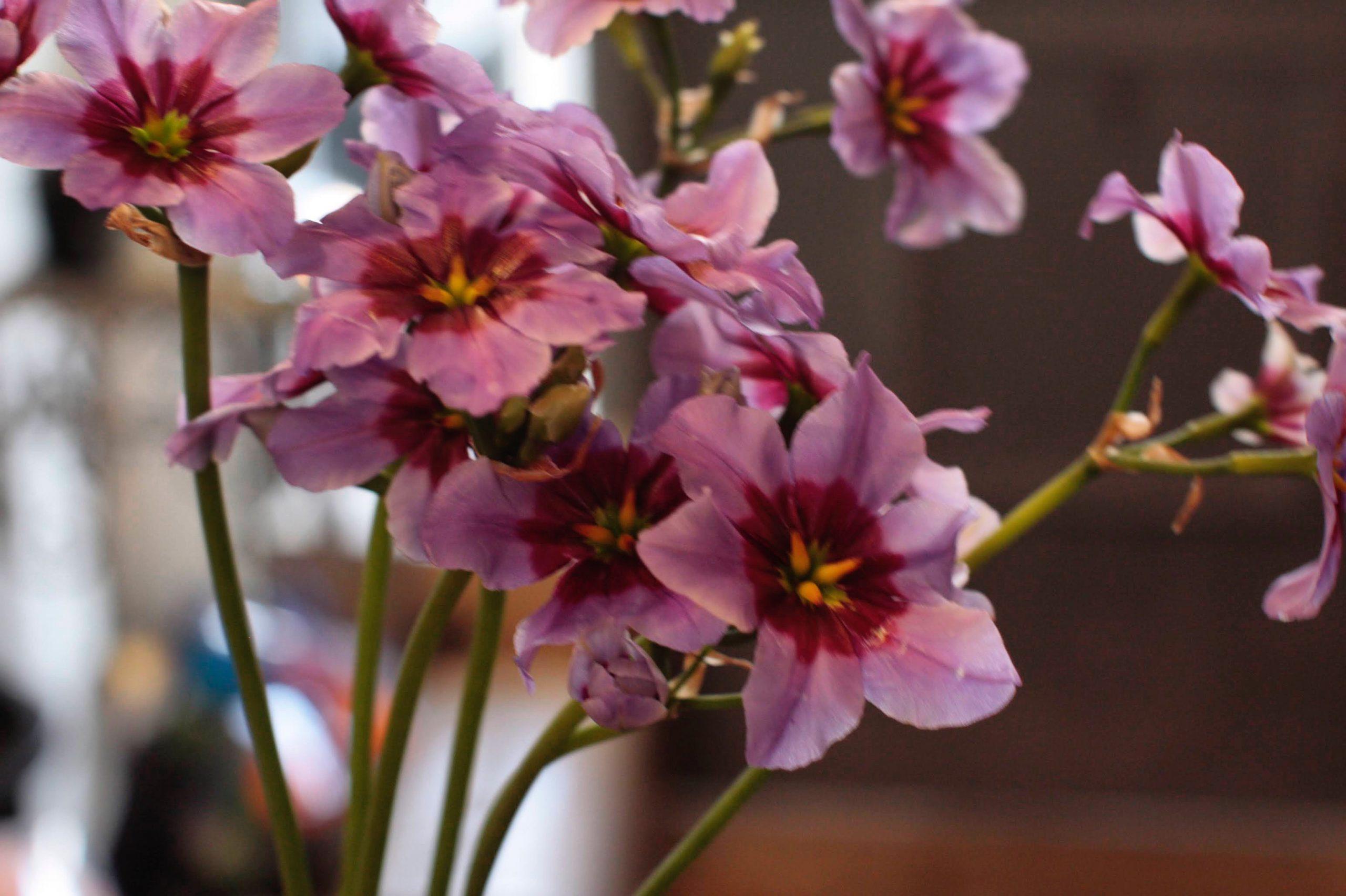 香りがするお花は少ないんです 福岡 花屋 フラワーアレンジ教室;
